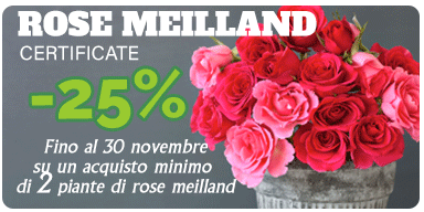offerta rose meilland fino al 30 novembre